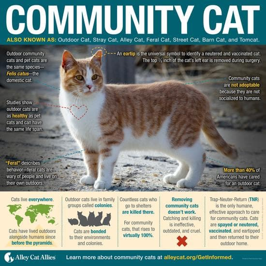 Community Cat Infographic