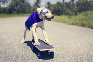 Superhero Dog On Skateboard Image