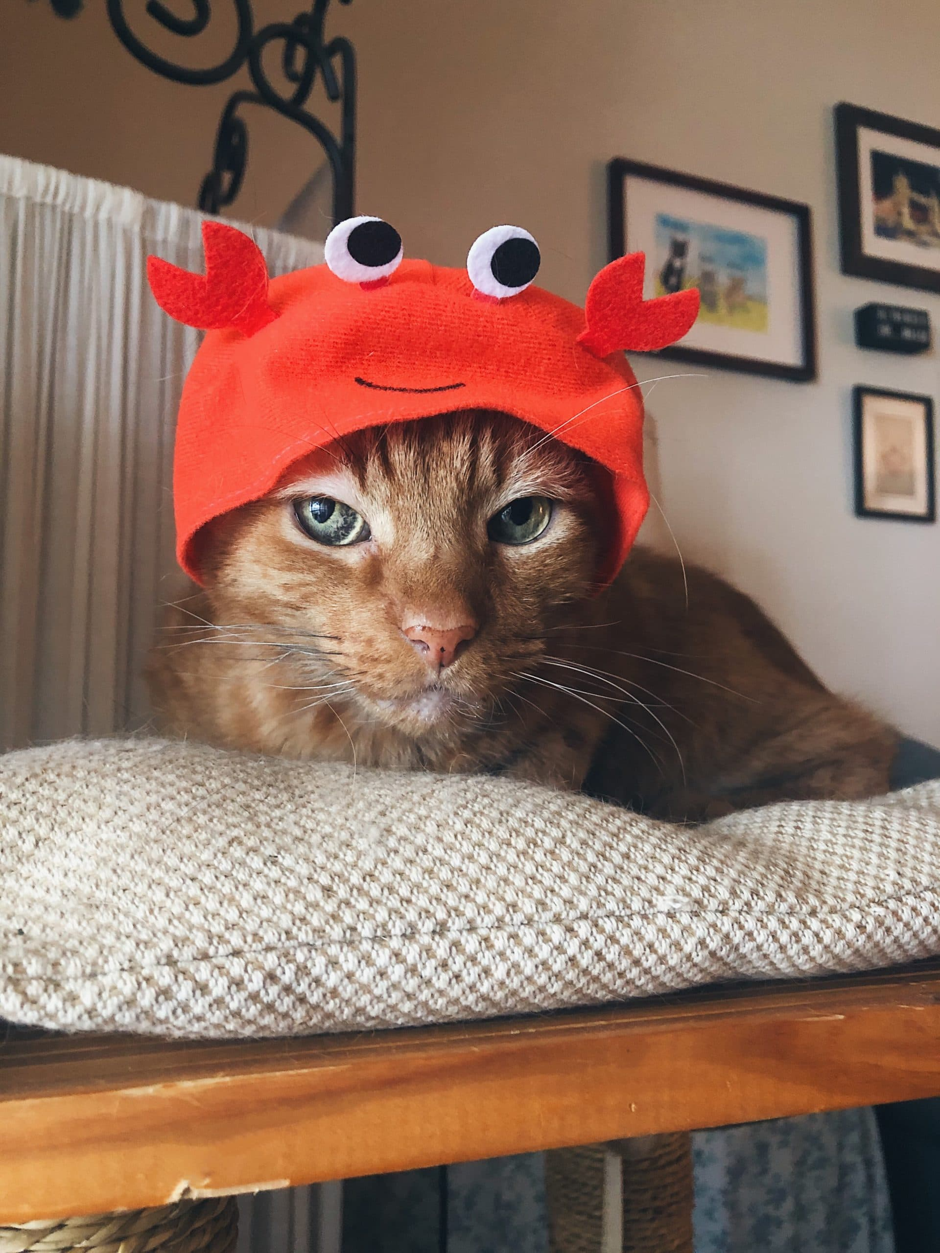 Larry Crab