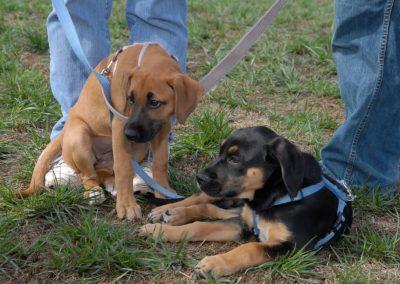NBHA DOG WALKATHON 2010 242_968x648