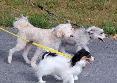 NBHA Dog Walk-a-Thon -187