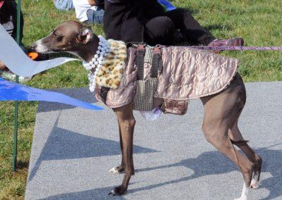 NBHA Dog Walk-a-Thon -344