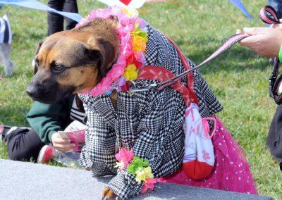 NBHA Dog Walk-a-Thon -345