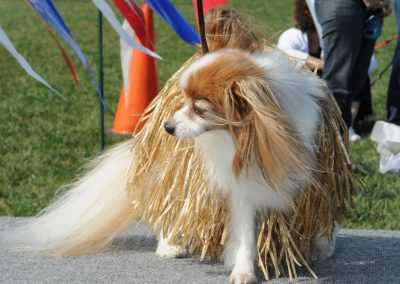 NBHA Dog Walk-a-Thon -384